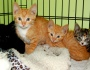 Kittens rescued from asbestos filled abandoned home